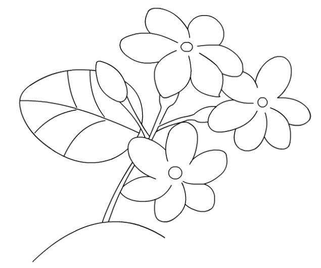ดอกมะลิ: ภาพระบายสีดอกมะลิ วันแม่ 12 สิงหา Jasmine Flower