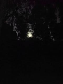 blog-de-poesia-miguel-angel-cervantes-noche