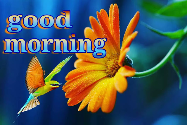 very beautiful good morning pictures
