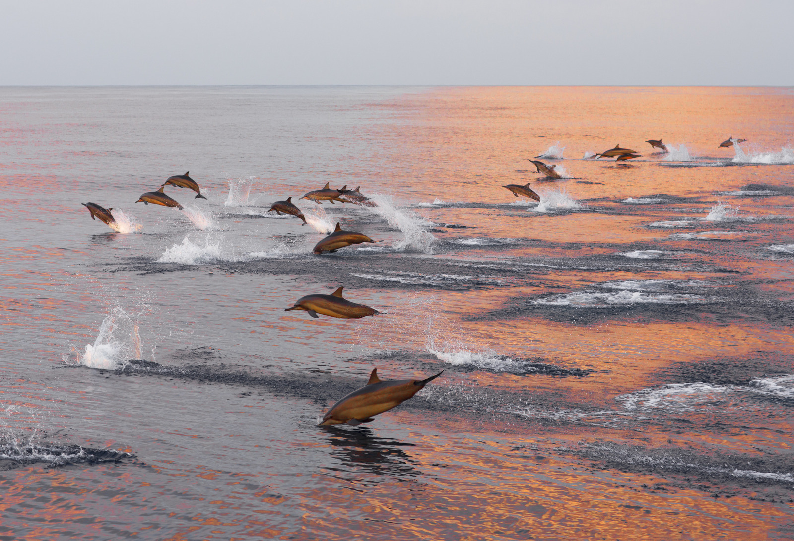 https://www.dolphinesse.com/p/escapade-insolite-dauphins-sauvages.html