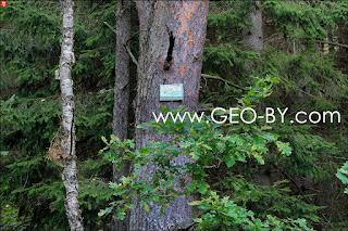 Лес под Войцехово (Новоспасском).  Ведется скрытое видеонаблюдение