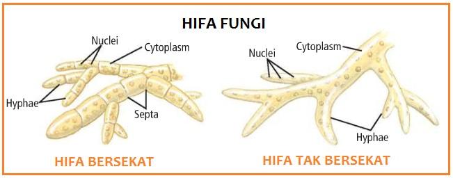 Fungi  Biokepo