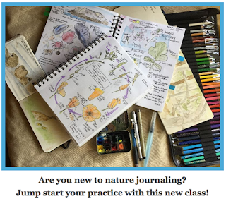 https://mailchi.mp/0c8b26581e84/intro-to-nature-journaling-registration-open