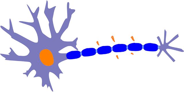 神經細胞膜電位差降低,傳導活性降低