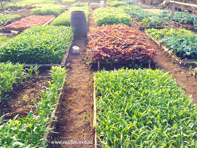 Orgomart, Ini Dia Sayuran Organik Di Malang Yang Murah Namun Tidak Murahan