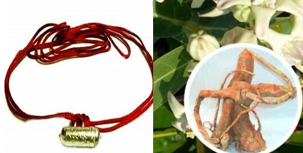 If you want to be rich, then the root of this plant dressed in amulets will be rich, know 5 ways
