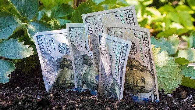 деньги растут