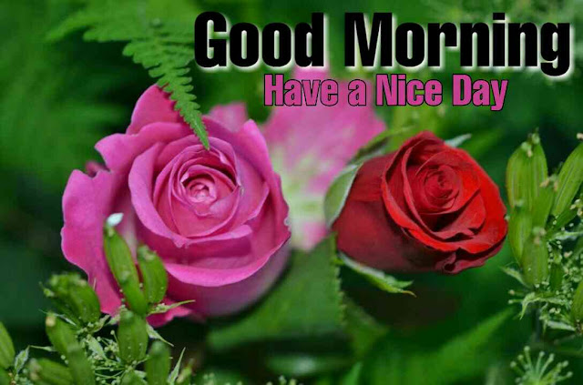 Beautiful Good Morrning image with Red rose and pink rose flower have a nice day