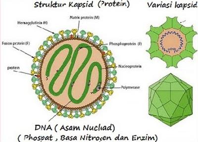 Struktur Kapsid pada Virus Influensa