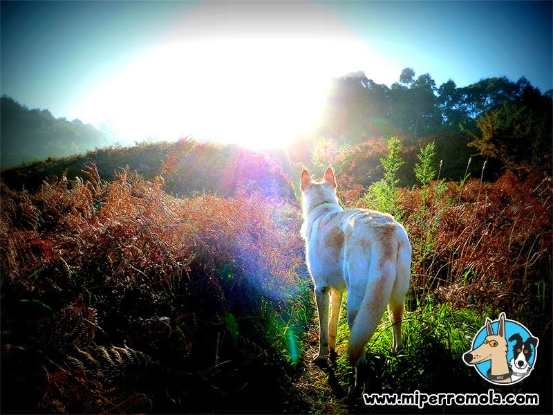 Can de Palleiro en la Ruta 3 de la Costa de Dexo - Serantes