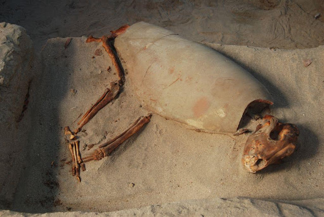 Oldest traces of canine bone cancer discovered at ancient Egyptian pet cemetery