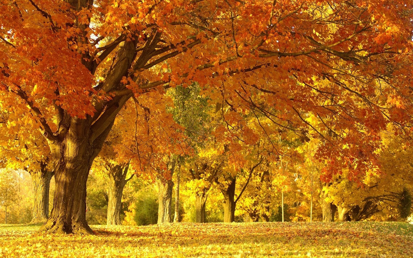 Wallpapers Autumn Scenery Desktop Wallpapers