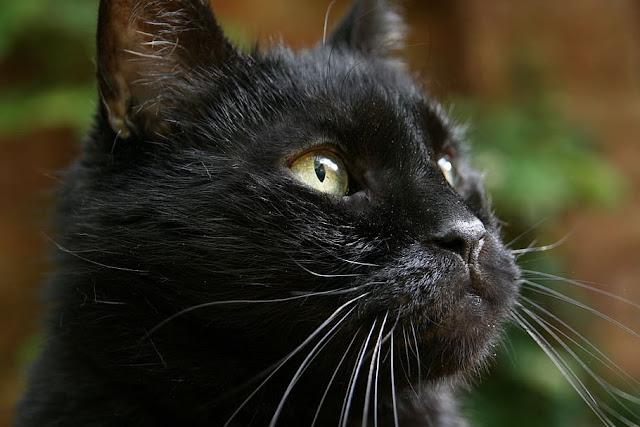 Jangan Potong Misai Kucing! Ini Fakta Mengenai Misai Kucing Yang Perlu Korang Tahu