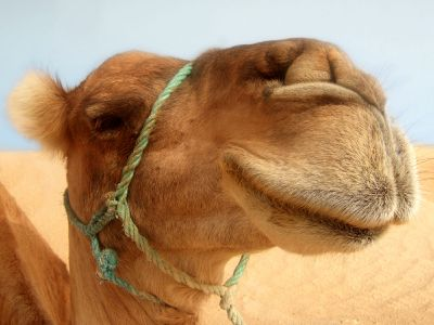 ARAMAIC NEW COVENANT ISSUES: A Greek Camel ? An Aramaic Rope ? The