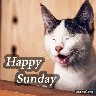happy sunday images funny