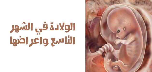 جنين في الرحم