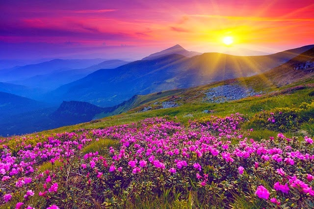 Valley of flowers - A National Park in the Indian Himalayas