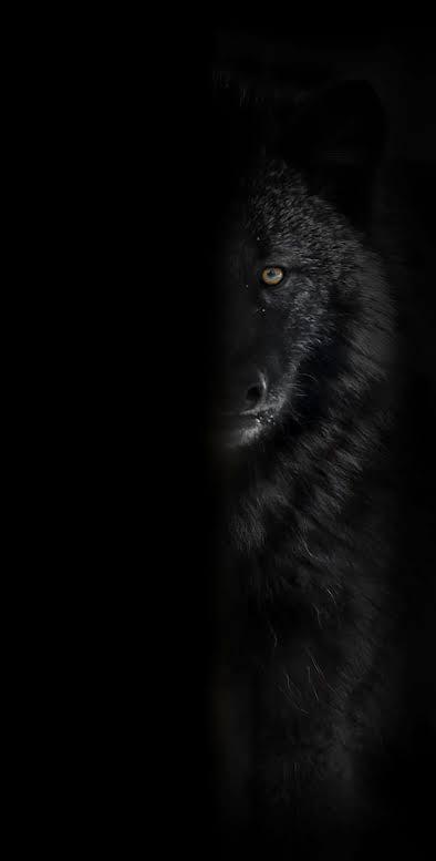 Music: MJ Boy - Black Wolve