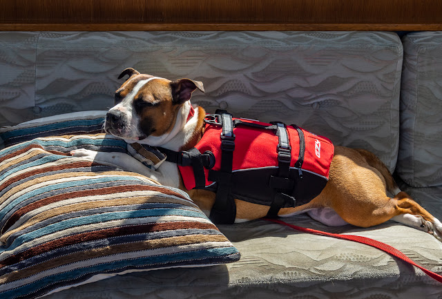 Photo of Ruby chilling out in her life jacket in Ravensdale's saloon