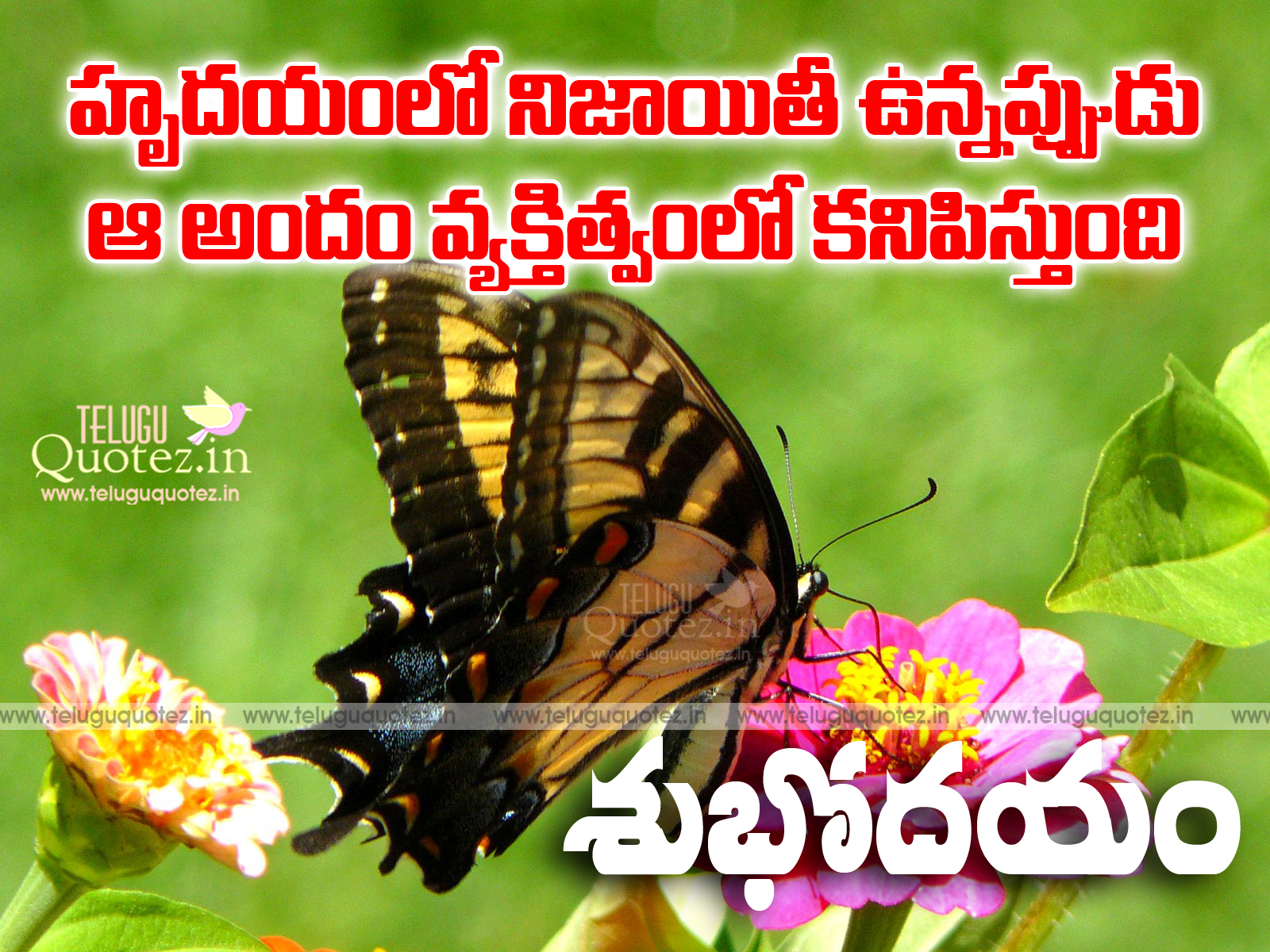 Best Good Morning Quotes In Telugu Greetings And Wishes