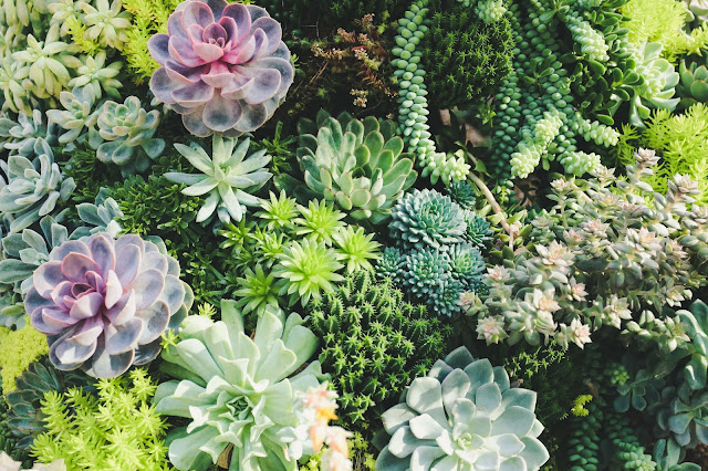 Beginner Lighting Guide for Growing Succulents Indoor