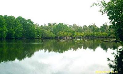 Ekosistem Hutan Payau Atau Hutan Mangrove
