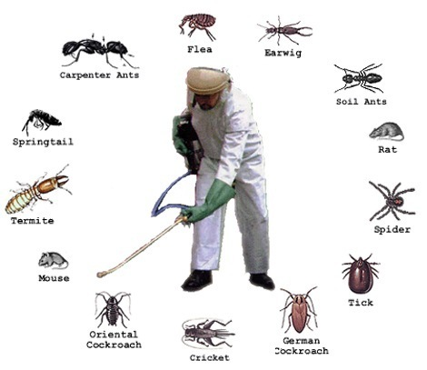 Intelligent Insect Control for Homeowners