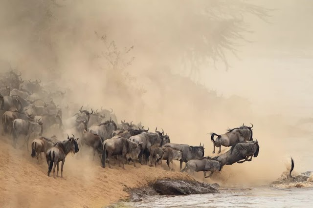 How to Experience the Great Migration in Kenya and Tanzania
