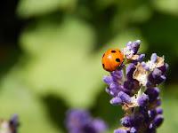 biovegan gärtnern und peaceful gardening