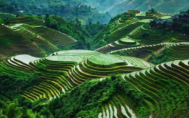 Longji terraced field