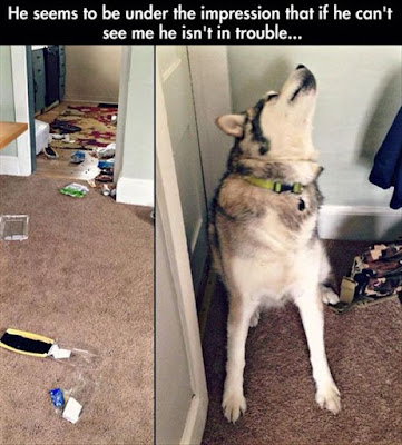 Funny Dog Humor : Sorry not me