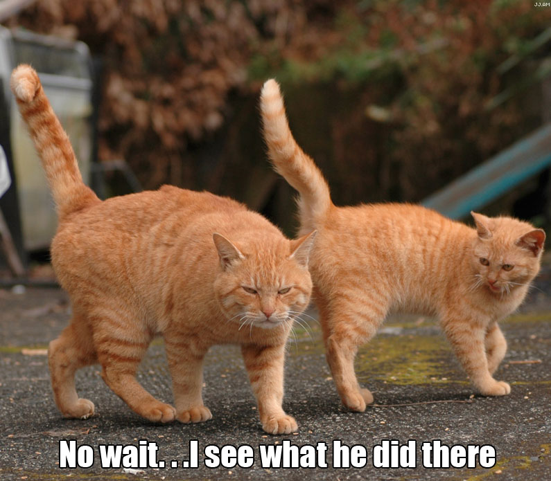 No wait... I see what he did there | Funny Cat Pictures