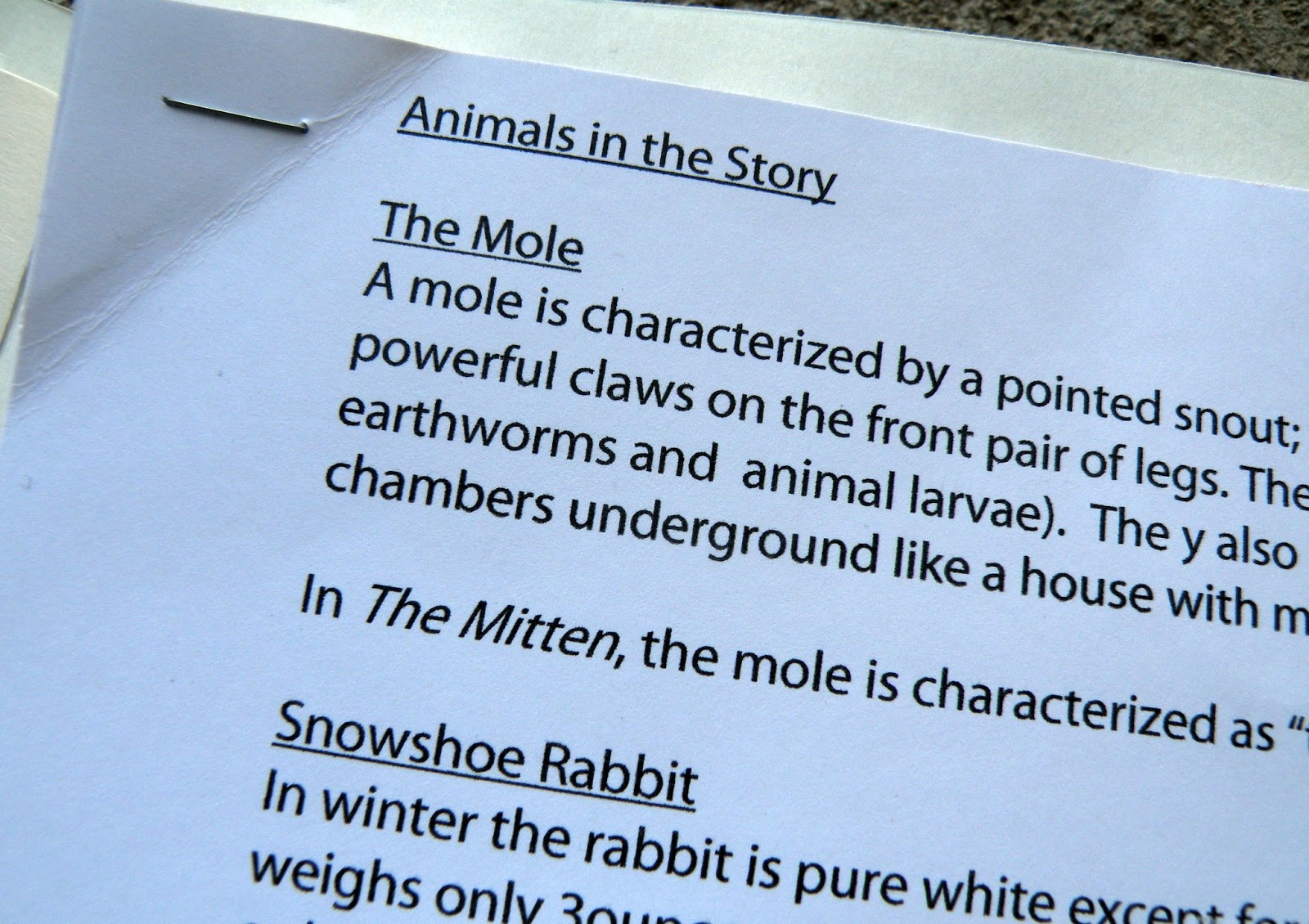 The Fantastic Five The Mitten Lapbooks