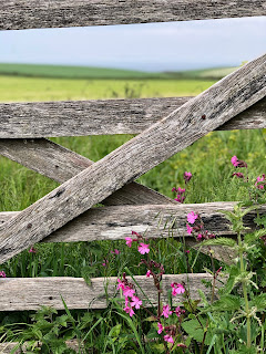 A gate to a field of flowers