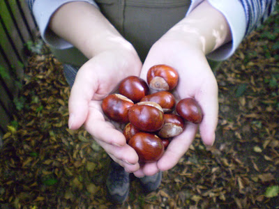 Hands full of conkers