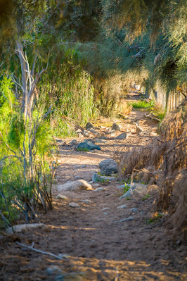 Wanderung zu den Wasserfällen im Barranco del Toro | San Agustín/Maspalomas | Wandern auf Gran Canaria 02