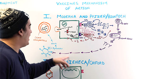 Explanation of what the vaccines do (Source: Ninja Nerd Lectures)