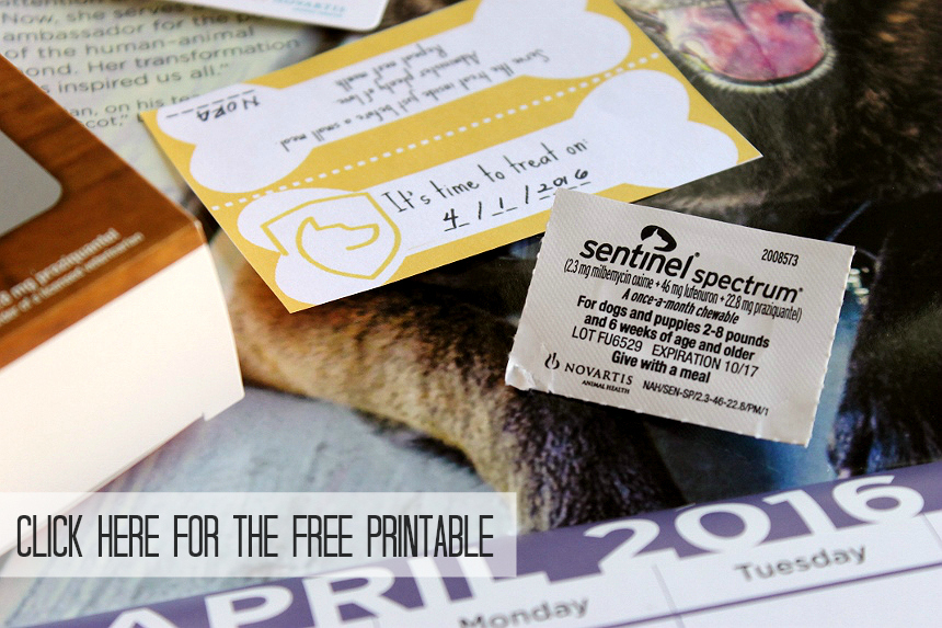 Protect your dog from the 6 most common parasites, year-round, indoors or outdoors, with one convenient bacon chew. As your vet about Sentinel® Spectrum® to learn more today. https://goo.gl/svrSjC #AD