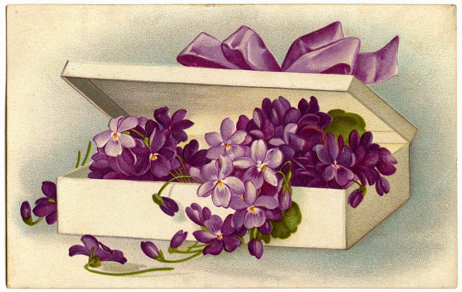 Violets in a fancy box