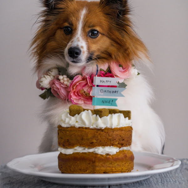 Pumpkin Dog Cake with Whipped Cream