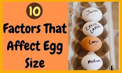 10 Factors that control Egg Size