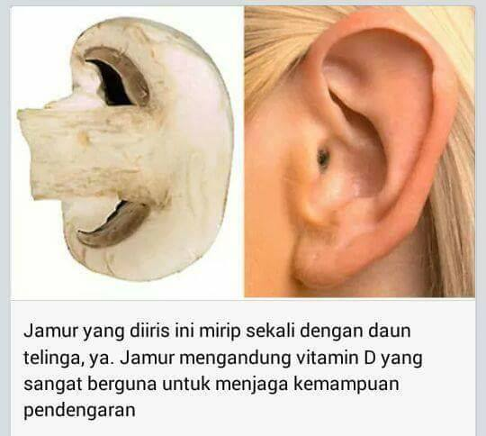 Jamur yang Menyerupai Daun Telinga