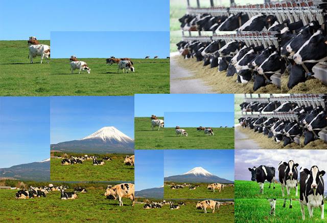 Tuyển dụng lao động đơn hàng chăn nuôi đi xkld tại Nhật Bản