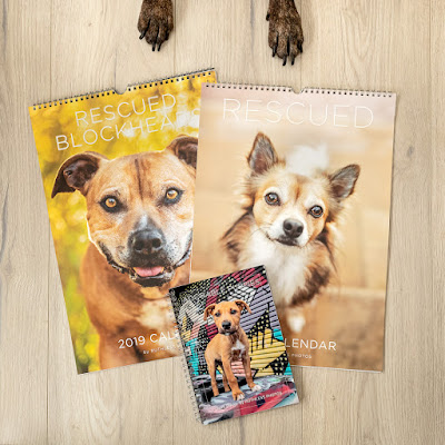 Ruthless-Photos-2019-Diaries-and-Calendar-fundraising-for-Fetching-Dogs-Sydney