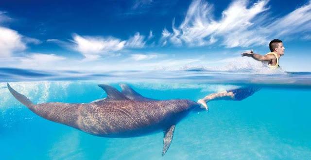 Atração Dolphinaris no Parque Ventura Park em Cancún