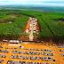 Santa Rita do Passa Quatro foi palco da maior feira florestal dinâmica do mundo em 2018