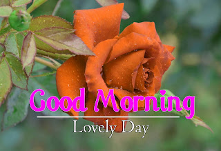 New Good Morning 4k Full HD Images Download For Daily%2B85