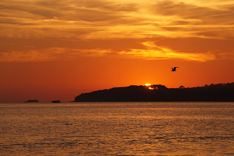 Möwe vor Sonnenuntergang in Kroatien am Meer   Sommer, Sonne, Urlaub   Tasteboykott