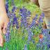 Δήμος Ιωαννιτών: Όλα όσα πρέπει να γνωρίζετε  για την  υποβολή αιτήσεων για τα προγράμματα αρωματικών φυτών