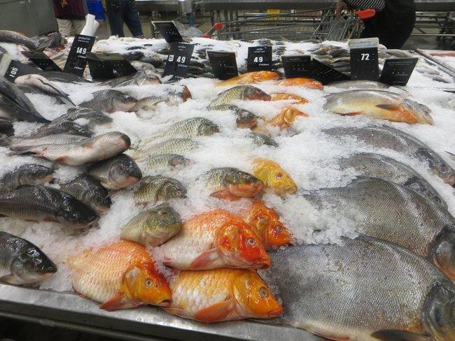 Куча различной рыбы в макро